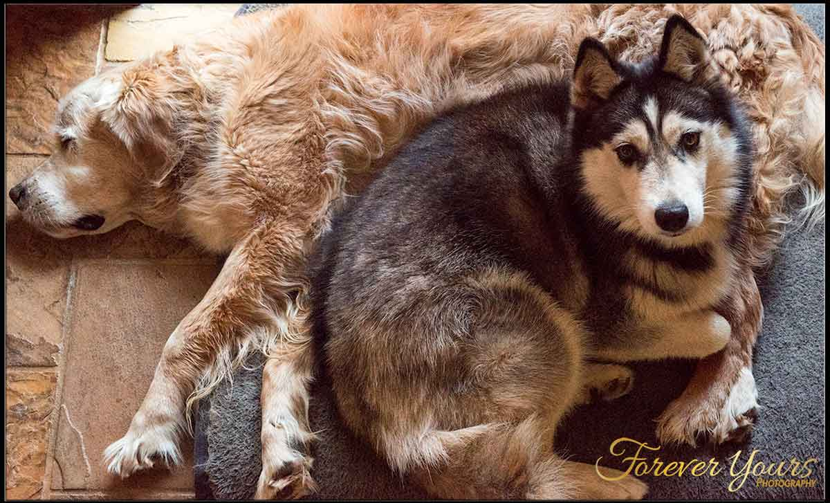 Rescue Huskies & what they teach us about life.